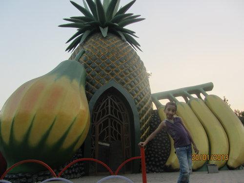 large fruits at NTR garden